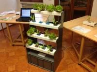 coltivazione aeroponica