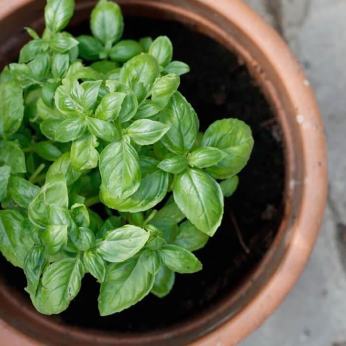 Come rinvasare le piante in modo corretto
